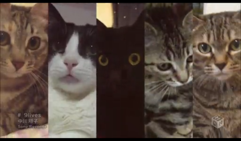 Music Video Features 9999 Cats
